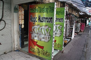 magic-mushrooms-kuta