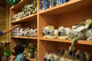 Stuffed toys, caps, T-shirts, key chains...every shelf in the souvenir store is lined with koala merchandise. (Photo by Sheyna Cruz)