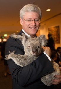 Canada's Prime Minister Stephen Harper with Jimbelung the koala as G20 leaders meet Australia koalas before the start of the first G20 meeting. Photograph by Andrew Taylor/G20 Australia (Creative Commons license).