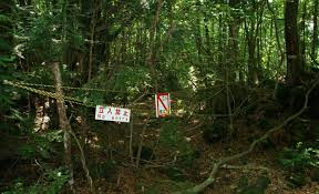 aokigahara forest warning
