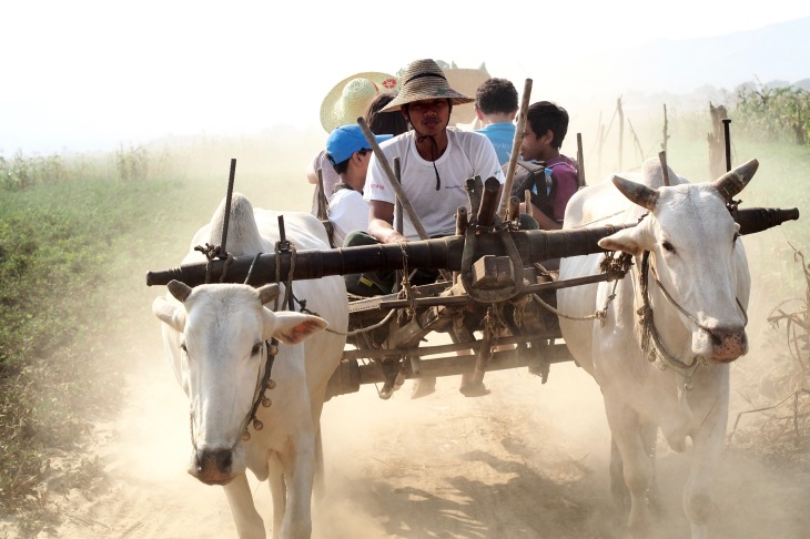 "Students riding in an ox cart, a popular mode for transporting goods or people around rural villages near Bagan, Myanmar (Burma), taken on the trip ""Documenting Democracy: Digital Storytelling in Burma."" Courtesy of Chloe Shin-Gay."